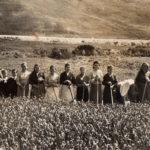 antonello-contadine-nei-campi-gannano-2