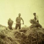 contadini-a-scaricare-le-grengne-dalla-pedina