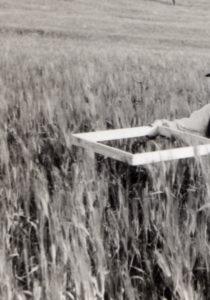 contadini-fattore-controllo-del-grano