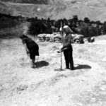 contadini-pesatura-donne-nellaia-morelli