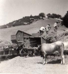 contadini-trebbiatura-8