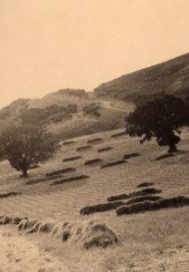 contadini-trebbiatura-mancarrone-luglio-1956